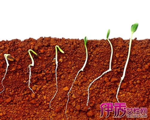 植物传播种子的图片_植物是怎样传播种子的