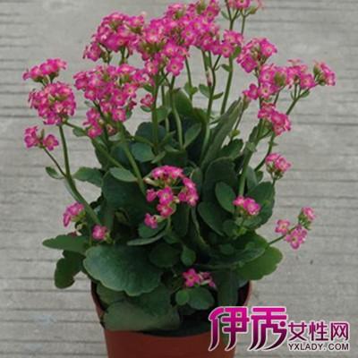 盆栽花卉图片及名称图片
