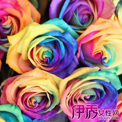【图】七彩玫瑰花图片大全