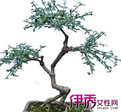 【图】迎春花盆景修剪与制作方法大全
