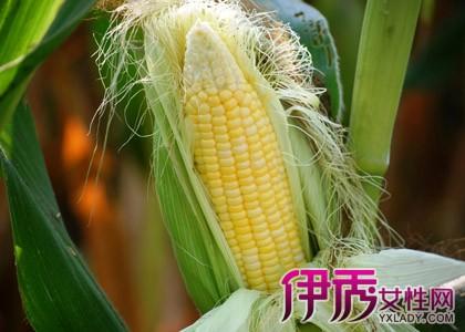 玉米须的功效_