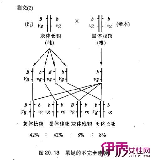 【图】遗传学三大基本定律分析