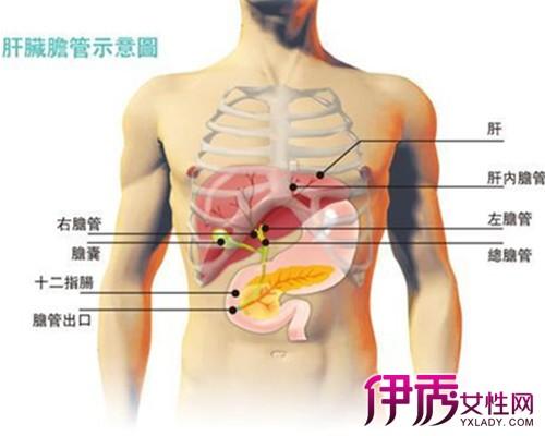 肝病的早期症状_肝病的症状
