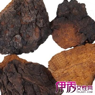【图】桦树茸的功效及副作用 介绍其药用价值和食法