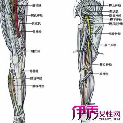 坐骨神经痛的症状 坐骨神经痛 坐骨神经痛最好的治疗方法 坐骨神经