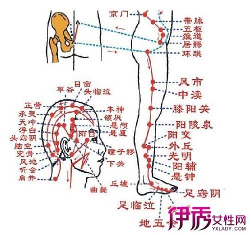 腿部六条经络图