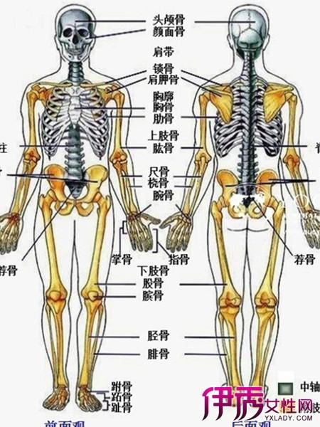 【图】人体骨骼名称图展示 人的全身居然有206块骨头