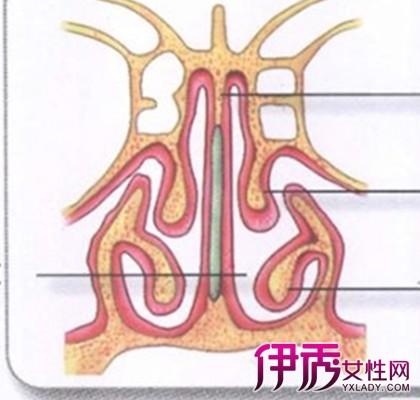 【图】正常鼻子内部结构图片大全 专家详解身体结构知识