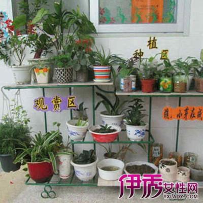 分享幼儿园植物角安顿图片及名称
