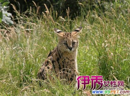 可爱野生小动物猎豹图片