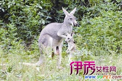 """""""武汉动物园""""相关资料"""