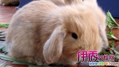 壁纸 床 动物 家居 家具 兔子 卧室 装修 500_280