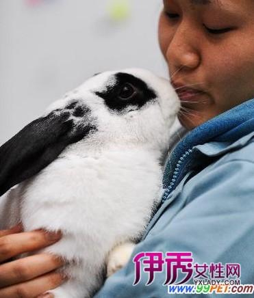 熊猫怎么画图片大全_熊猫兔怎么养