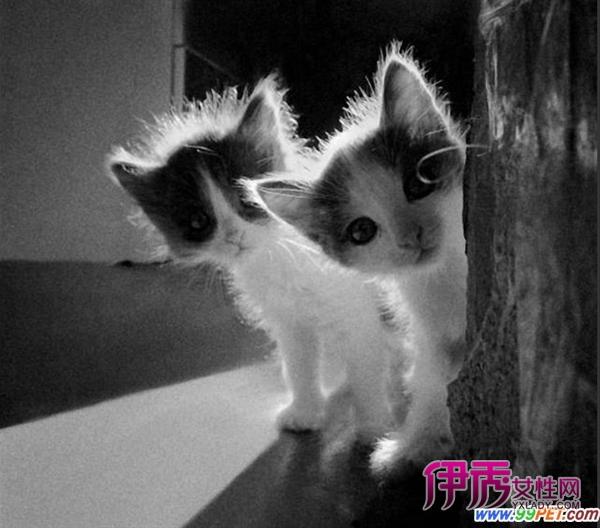 猫咪的黑白照也萌(多图)