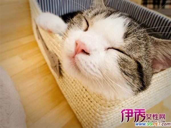 壁纸 动物 猫 猫咪 小猫 桌面 600_450