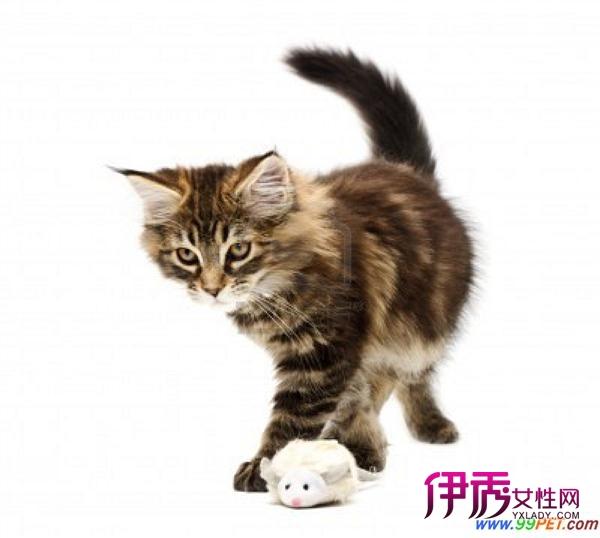 壁纸 动物 猫 猫咪 小猫 桌面 600_538