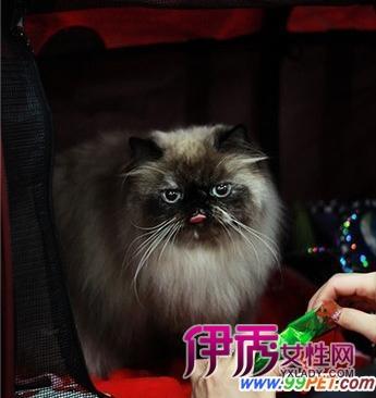 猫咪头晕图片可爱