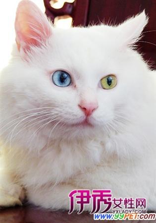 壁纸 动物 猫 猫咪 小猫 桌面 315_450 竖版 竖屏 手机