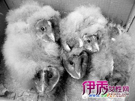 黄鹂燕子信息正文有牛蛙,大山雀,益虫,啄木鸟,益鸟,白头翁等行业如何v黄鹂杜鹃图片