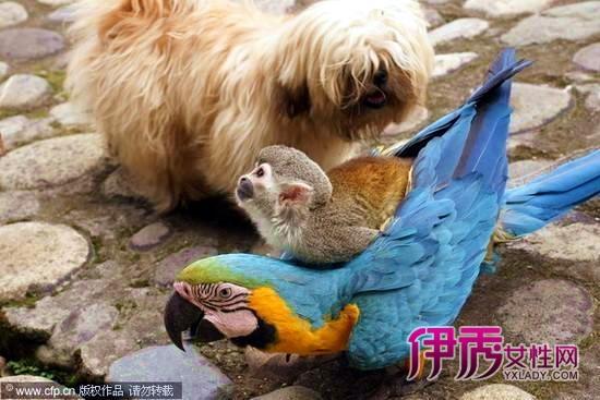骑飞行动物图片