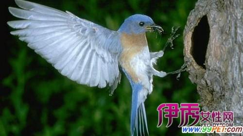 武汉大学 life.yxlady.com-伊秀生活小常识