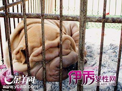 沙皮狗面包_爱自己爱动物