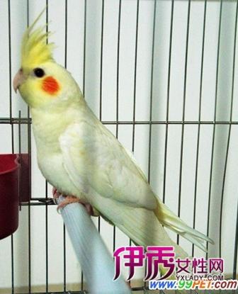 """我们动物园有一只叫""""三三""""的鲑色鹦鹉"""