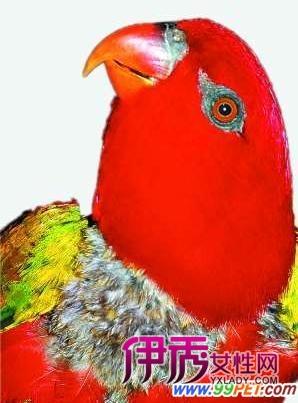 壁纸 动物 鸟 鹦鹉 298_403 竖版 竖屏 手机