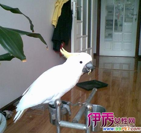 """我们动物园有一只叫""""三三""""的鲑色鹦鹉,由于它比较大胆,互动性又特别"""