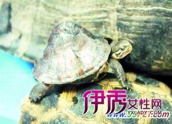 全身金黄的巴西金龟,形象特异的驼龟,娇小可爱的星星龟,蛇头弯曲的蛇