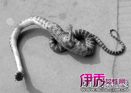 画蛇添足成语故事讲解_捂死老婆狂添美足_偷添姐的美足