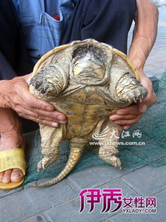 查看全文 体检龟岛动物园阿尔达布拉 2012/6/16 22:56:18 27日,在