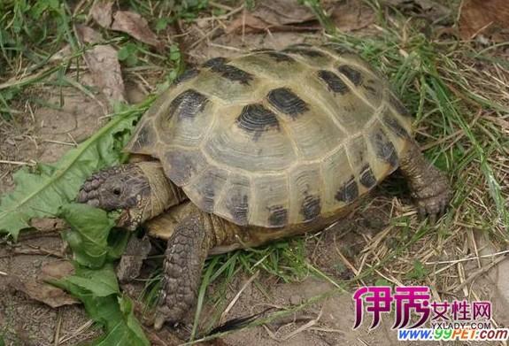 动物 龟 575_391