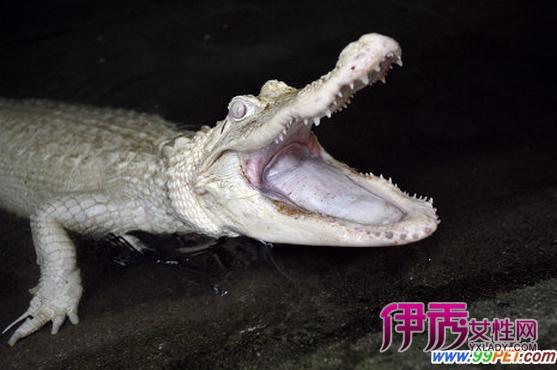 游客鳄鱼动物园
