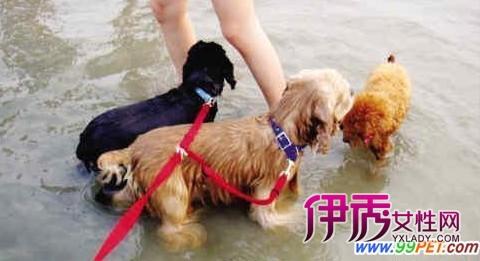 宠物旅行团受欢迎 人与狗狗共享其乐(图)