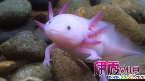 世界 六角恐龙 广州海洋馆/马尾斗鱼...