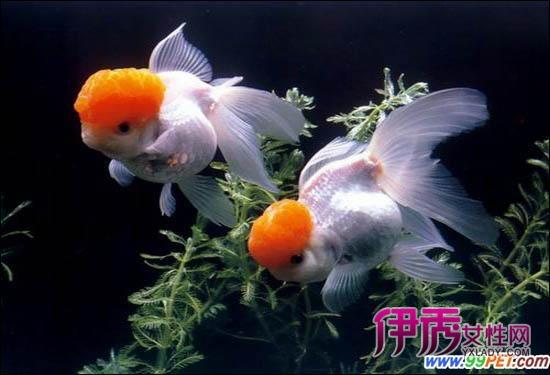 泥鳅孵化池 孵化机 孵化机3768 87486 孵化池