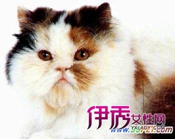 壁纸 动物 猫 猫咪 小猫 桌面 350_279