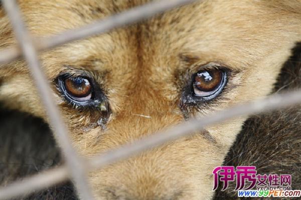 小动物保护协会(5)|life.yxlady.com-伊秀生活小常识