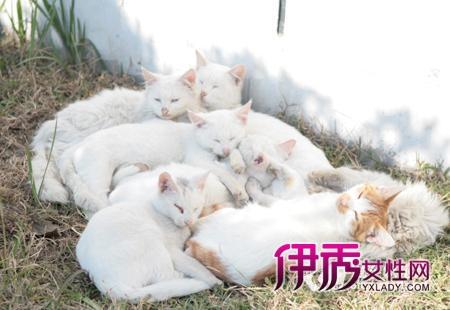 猫咪的精心呵护也充分体现了他们对小动物的一片爱心