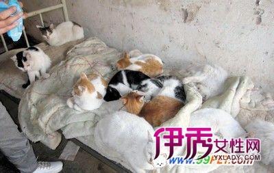 目前,这批猫由上海小动物协会接管,暂寄养在郊区一处出租房内,并期待