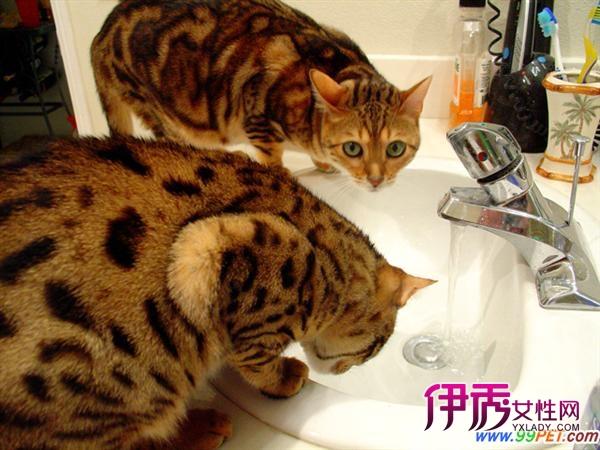 """查看全文 小猫咪花花蔡女士大白 2012/6/18 12:05:34 """"公猫""""生崽的"""