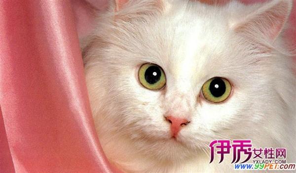 壁纸 动物 猫 猫咪 小猫 桌面 600_350