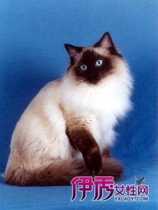 查看全文 猫咪岛屿印度洋猫岛 2012/6/16 17:54:30 而猫的睡眠时间更