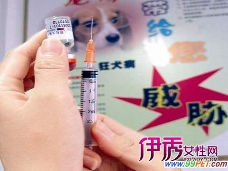 打狂犬疫苗期间不能吃什么食物