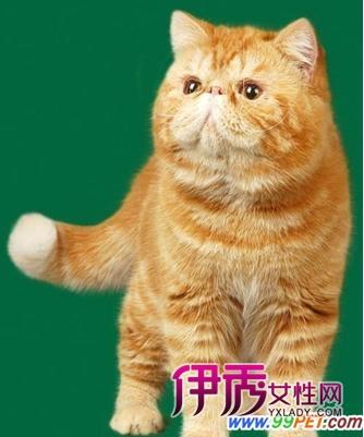壁纸 动物 猫 猫咪 小猫 桌面 334_401