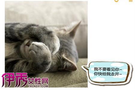 壁纸 动物 猫 猫咪 小猫 桌面 450_300