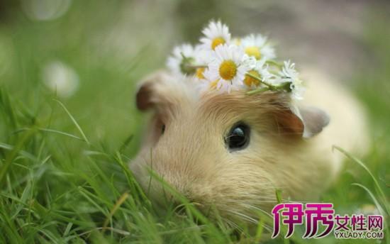 很多反映养朋友的仓鼠都看着,买了蝴蝶仓鼠回家,喜爱他们快乐健康的长坚强的宝宝谁唱的图片