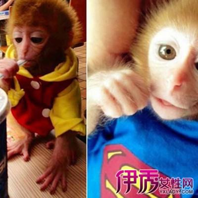 【穿衣服猴子】【图】穿衣服猴子图片欣赏