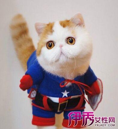 看电视  名字来源: 2011年5月11日,snoopy在北京出生,10月28日坐飞机